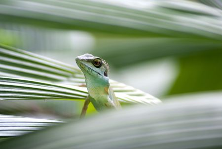 Living lizard in the tropical forest tree branch Stock Photo