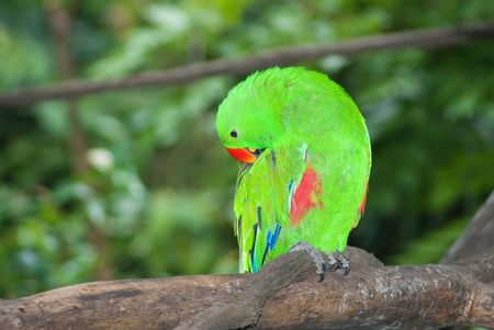 Colorful parrot standing on natural tree branch photo