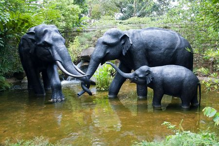 Elephant family play around the small pool