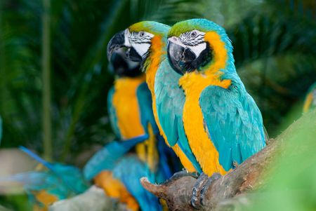 Parrot family standing on tree branch in singapore brid park
