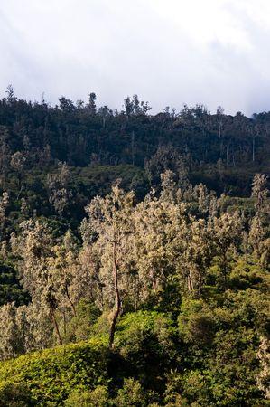 mountainous: green mountainous forest in indonesia wild grassland Stock Photo
