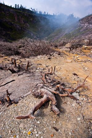 active volcano: Dry brown bush in indonesia active volcano crater Stock Photo