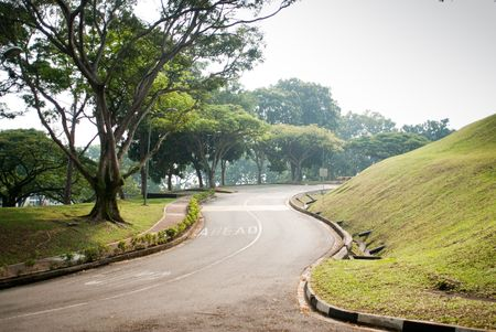 natural tree background in Singapore university campus Stock Photo