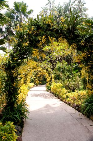 path to romance: National Orchid Garden @ Singapore Botanic Garden