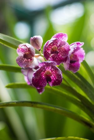Blooming orchid flower in singapore botanic garden Stock Photo - 5999267