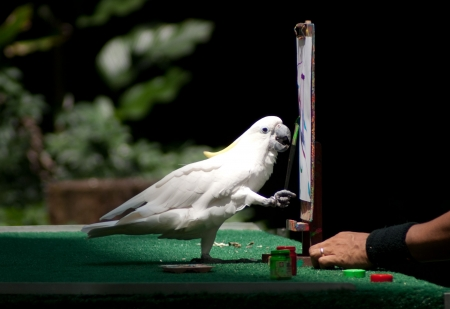 white parrot drawing with paint brush and palette Stock Photo