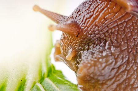 close up shot of live snail isolated on white background Stock Photo