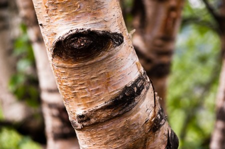 the eye of nature, in a tree body Stock Photo