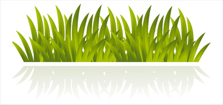 grass illustration: fresh grass isolated on white