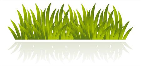 illustration herbe: herbe fra�chement isol�e sur fond blanc Illustration