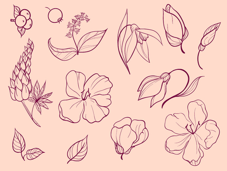 Set of sketches and line doodle plant. Thirteen elements. Flowers, buds, petals, leaves, berries. Vettoriali