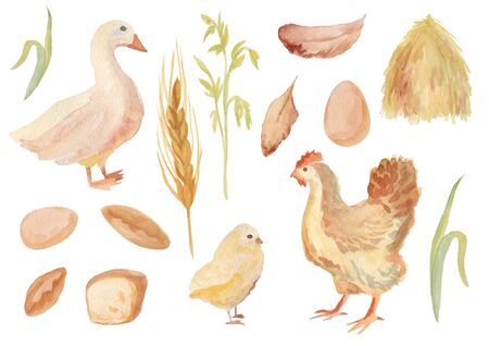 Watercolor farm set. Hand drawn hen ,duck, spica, feather and nestling isolated on white background. 写真素材