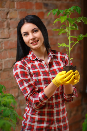 than: More than just a hobby. Shot of an attractive female gardener holding a seedling in her greenhouse smiling to the camera. Stock Photo