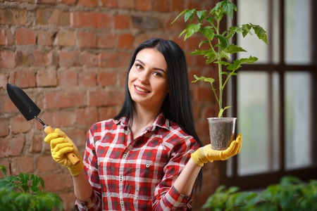 cheerfully: Proud of her gardening. Charming young brunette posing with a plant in a pot looking to the camera cheerfully. Stock Photo
