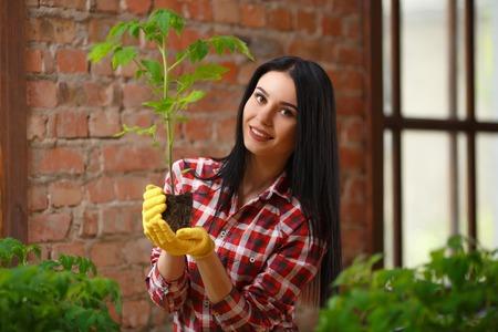 indoors: Nature indoors. Beautiful female gardener checking her growing seedling indoors.