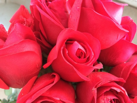 roses rouges: Roses rouges