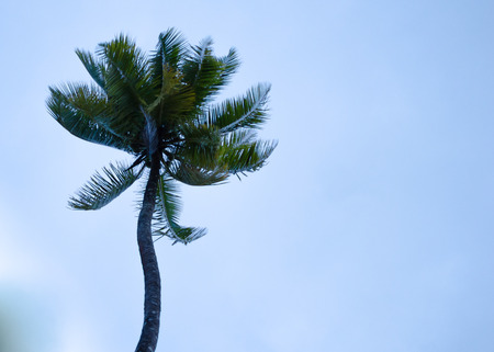 Palm Tree Standing Tall at the Beach
