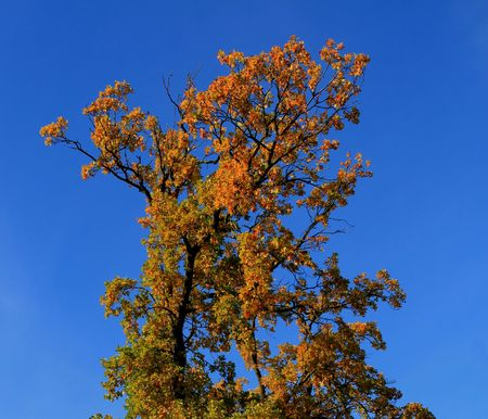 Lovely tree at the fall