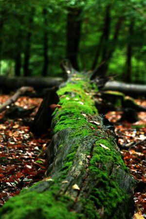 Fallen tree Stock Photo - 2119031
