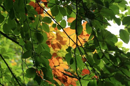 Leaves to fall