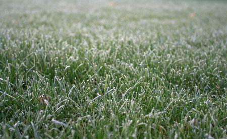 Frozen Grass 2 on a oct morning
