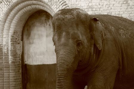 Mother Elephant at the zoo