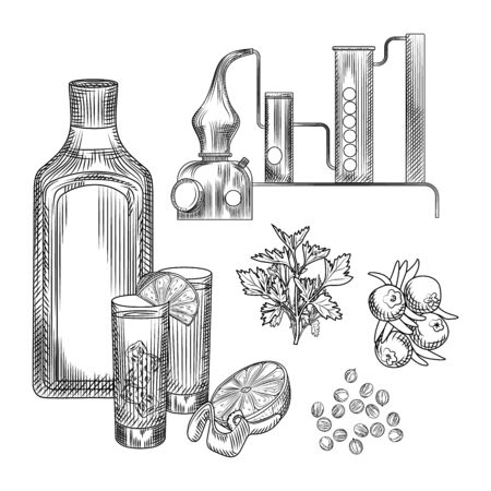 Set of gin in hand drawn style on white background.glasses with gin and tonic cocktail, alembic, coriander, lemon peel. Element for bar menu design. Engraving vintage isolated vector illustration.