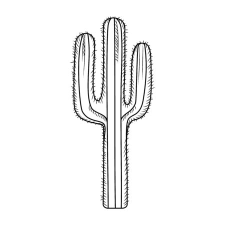 Hand drawn cactus isolated on white background. Engraving vintage style. Vector illustration. Фото со стока - 148420828