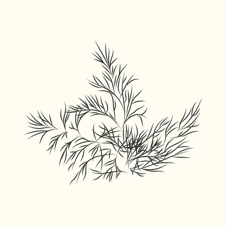 Dill herb branch ink sketch isolated. Monochrome food ingredient. Botanical herbal. Flavoring plant in vintage hand drawn engraved style. Vector illustration Vettoriali