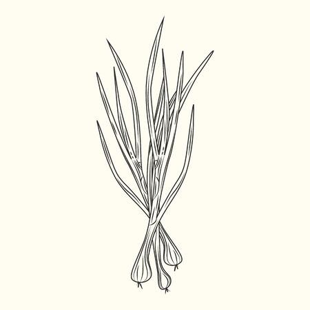 Green onion ink sketch isolated. Monochrome food ingredient. Natural organic fresh food. Vintage hand drawn engraved style. Vector illustration