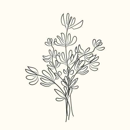 Thyme sketch isolated on background. Food ingredient. Vintage hand drawn engraved style. Vector illustration Ilustração