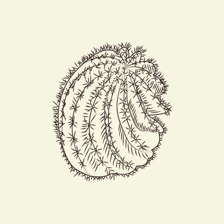 Astrophytum cactus isolated on light background. Wild cacti sketch. Engraving vintage style. Vector illustration.