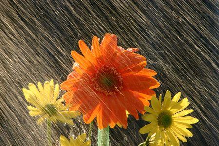 precipitacion: Lluvia de Flores
