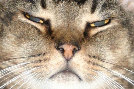 Cat Face Close Up Stock fotó
