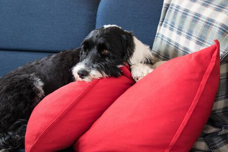 cute dog relaxing on the sofa