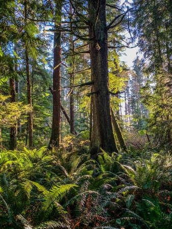 Lush rain forest on Vancouver Island, British Columbia in Autumn