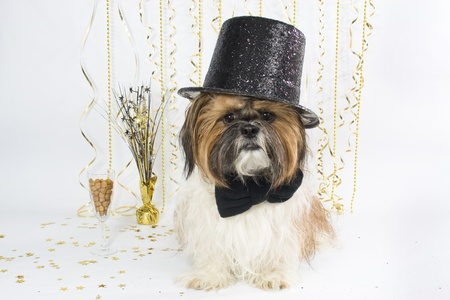 A Shih Tzu in a fancy top hat celebrates New Years with a champagne glass of kibbles. photo