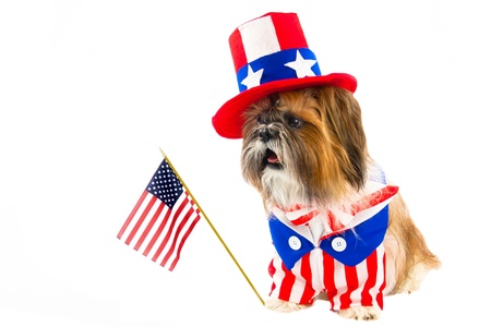 A Shih Tzu celebrates the Fourth of July in red, white and blue, including a top hat and flag. photo