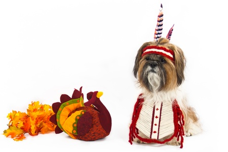 animal thanksgiving: A Shih Tzu, dressed in an Indian chest plate with a head band and feathers, sits beside a stuffed turkey.