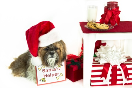 "A Shih Tzu wearing a Santa hat and ""Santa's Helper"" sign sits by cookies and milk for Santa. photo"