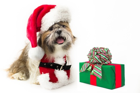 A Shih Tzu is dressed in a Santa outfit and hat photo