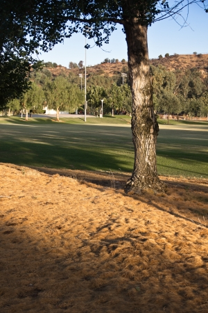 Pine needles fill the ground by a tree in the park  Banco de Imagens