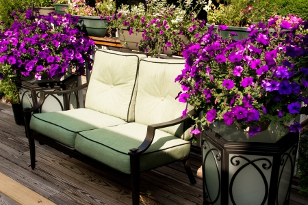 An inviting lounge seat is nestled between containers of purple petunias