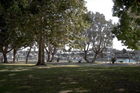 木陰のある公園を見下ろすマリーナ ・ デル ・ レイ、カリフォルニアの一部 写真素材