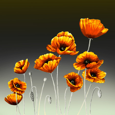 Orange Poppies and buds are on a background gradated  from light gray to black.
