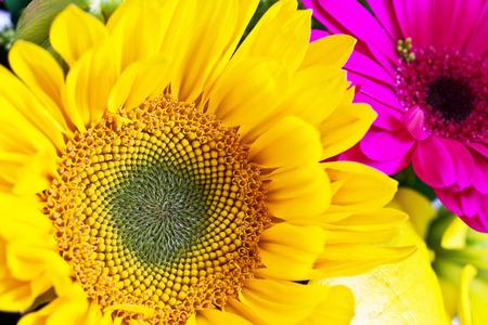 aster: A bright sunflower nestles beside a magenta aster.