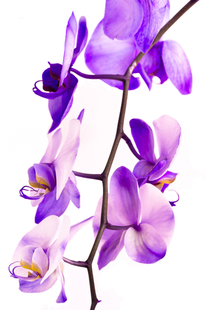 An orchid spray is pink-lavender in color. Imagens
