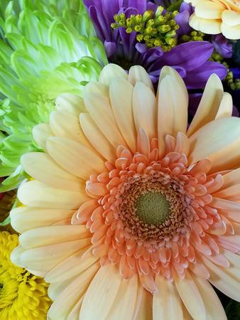 Peach and Green Gerber Daisy Bouquet