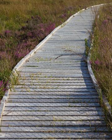 walk board: board walk