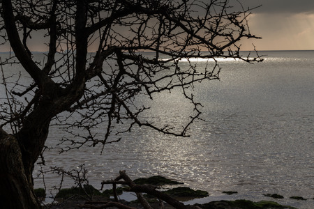 winter tree silhouette: winter tree silhouette, beside the sea in winter. High tide at sunset with a pool of sunlight